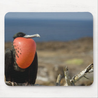 Ecuador, Galapagos, Genovesa Island. Prince Mouse Pad
