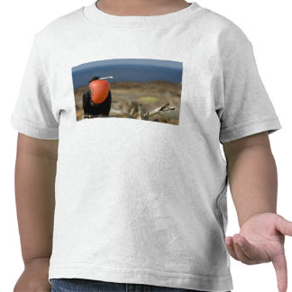 Ecuador, Galapagos, Genovesa Island. Prince Tshirts