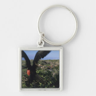 Ecuador, Galapagos Islands, Magnificent Key Ring