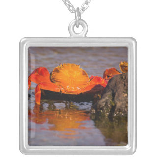 Ecuador, Galapagos Islands National Park, 2 Silver Plated Necklace