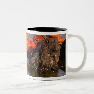 Ecuador, Galapagos Islands National Park, 2 Two-Tone Coffee Mug