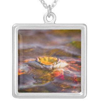 Ecuador, Galapagos Islands National Park, 3 Silver Plated Necklace