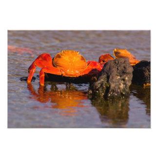 Ecuador, Galapagos Islands National Park, Photo Art