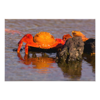 Ecuador, Galapagos Islands National Park, Photo Print