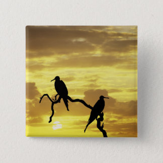 Ecuador, Galapagos Islands. Silhouette of 15 Cm Square Badge