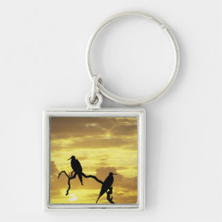 Ecuador, Galapagos Islands. Silhouette of Key Ring