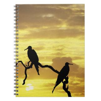 Ecuador, Galapagos Islands. Silhouette of Notebooks