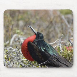 Ecuador, Galapagos, North Seymour. Great Mouse Pad
