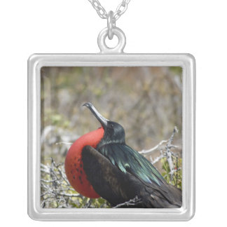 Ecuador, Galapagos, North Seymour. Great Silver Plated Necklace