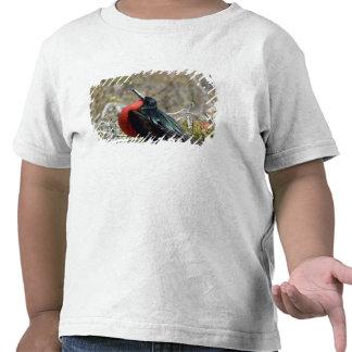 Ecuador, Galapagos, North Seymour. Great T-shirts