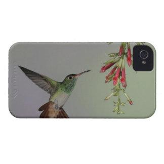 Ecuador, Tandayapa Bird Lodge. Rufous-tailed Case-Mate iPhone 4 Case
