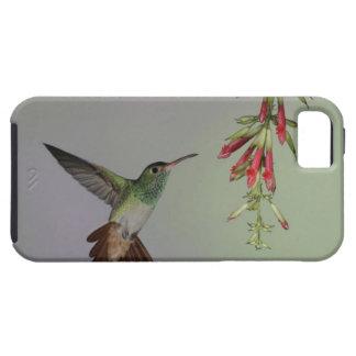 Ecuador, Tandayapa Bird Lodge. Rufous-tailed iPhone 5 Case