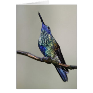 Ecuador, Tandayapa Bird Lodge. Sparkling Card