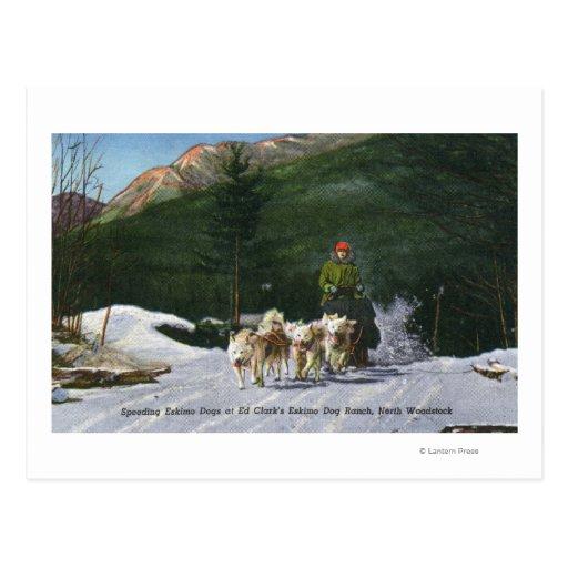 Ed Clark's Eskimo Dog Ranch, Dogsledding Post Cards