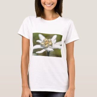 Edelweiss Alpine flower T-Shirt