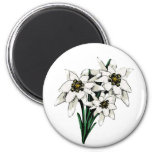 Edelweiss Flowers 6 Cm Round Magnet