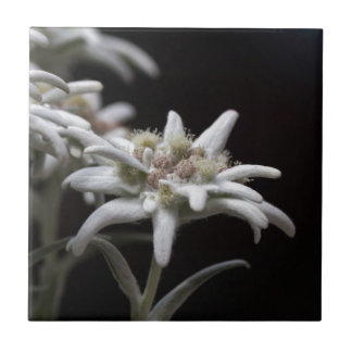edelweiss in the mountain tile