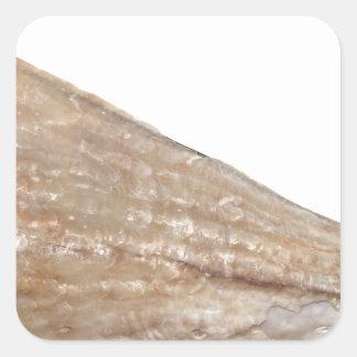 Edge of Seashell Close Up Picture Square Sticker
