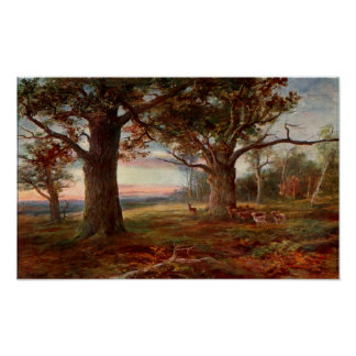 Edge of Sherwood Forest Print