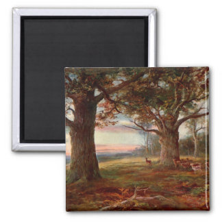 Edge of Sherwood Forest Square Magnet