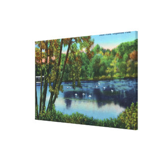 Edgewood Park View of the Duck Pond Canvas Print