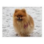 Edgrrrr #2 - Pomeranian Postcard