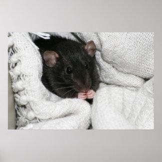 Edgworth The Rat Poster