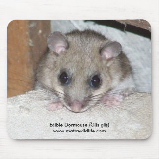 """Edible Dormouse"" Mousepad"