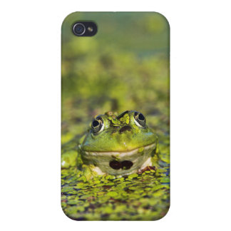 Edible Frog in the Danube Delta Case For iPhone 4
