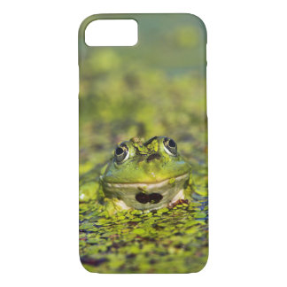 Edible Frog in the Danube Delta iPhone 8/7 Case