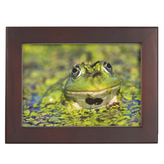 Edible Frog in the Danube Delta Keepsake Boxes