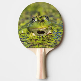 Edible Frog in the Danube Delta Ping Pong Paddle