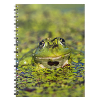 Edible Frog in the Danube Delta Spiral Notebook