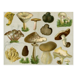 Edible Fungi - Mushrooms and Toadstools Postcard