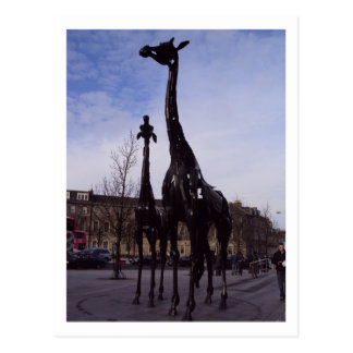Edinburgh Giraffes Postcard