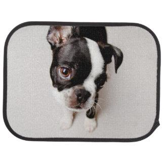 Edison Boston Terrier puppy. Car Mat