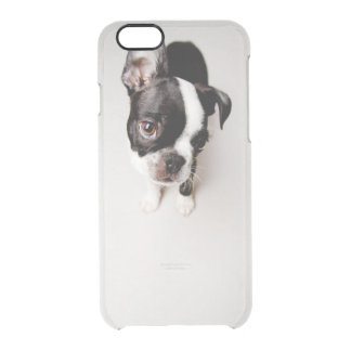 Edison Boston Terrier puppy. Clear iPhone 6/6S Case