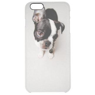 Edison Boston Terrier puppy. Clear iPhone 6 Plus Case