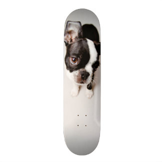 Edison Boston Terrier puppy. Custom Skate Board