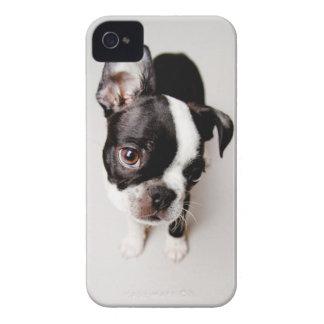Edison Boston Terrier puppy. iPhone 4 Cases