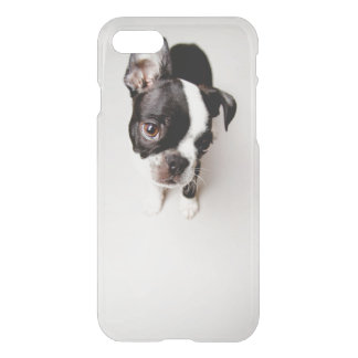 Edison Boston Terrier puppy. iPhone 8/7 Case