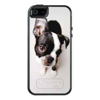 Edison Boston Terrier puppy. OtterBox iPhone 5/5s/SE Case