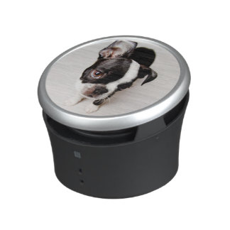 Edison Boston Terrier puppy. Speaker