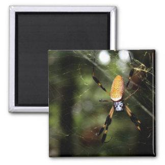 Edisto Golden Silk Spider 3519 Fridge Magnets