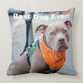 Editable Dog with Bandanna Cushion
