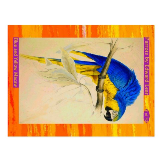 Edward Lear. Blue and Yellow Macaw. Postcard