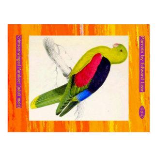 Edward Lear. Crimson-winged Parakeet. Adult male. Postcard
