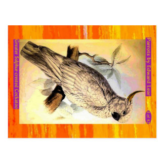 Edward Lear. Greater Sulphur-crested Cockatoo. Postcard