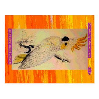 Edward Lear. Lesser Sulphur-crested Cockatoo. Postcard