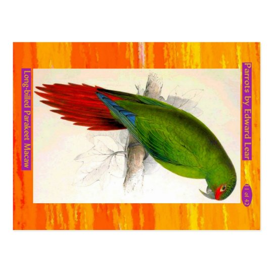Edward Lear. Long-billed Parakeet Macaw. Postcard
